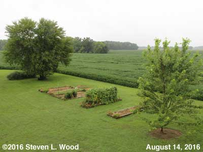 Our Senior Garden - August 14, 2016