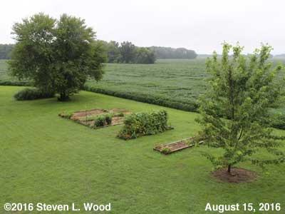 Our Senior Garden - August 15, 2016
