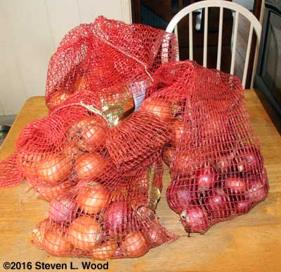Onions bagged for storage