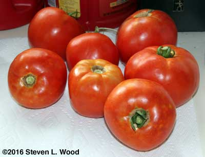 Bella Rosa tomatoes