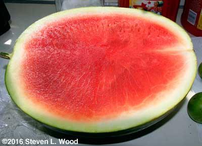 Pretty seedless watermelon