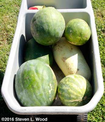 Good melons