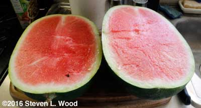 Halved Blacktail Mountain Watermelon