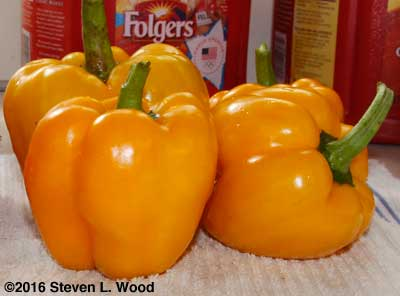 Mecate yellow peppers