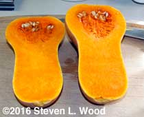 Butternut cut in half