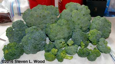 Lots of fall broccoli