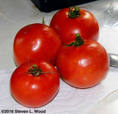 Fresh tomatoes from our garden on October 19!