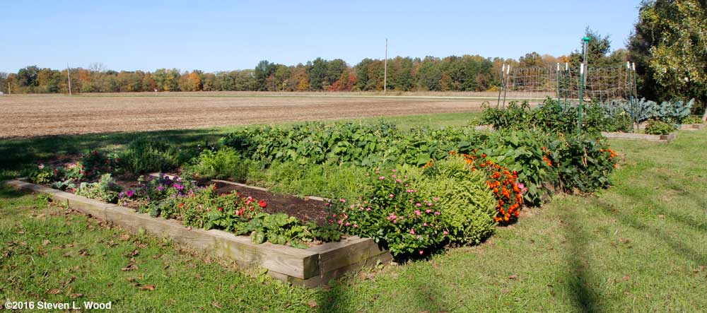 Main raised bed on October 23,