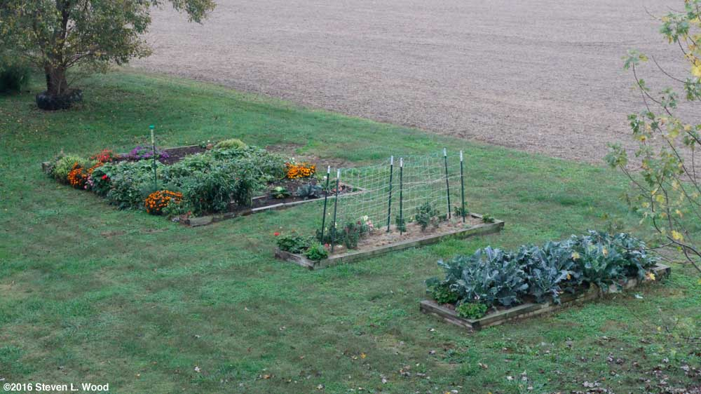 Closer view of raised beds