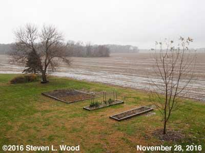Our Senior Garden - November 28, 2016