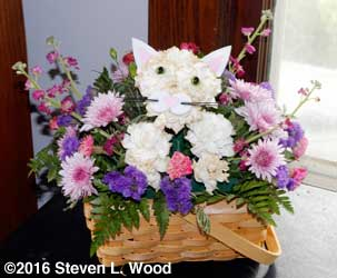 Not gloxinias, but a cat bouquet