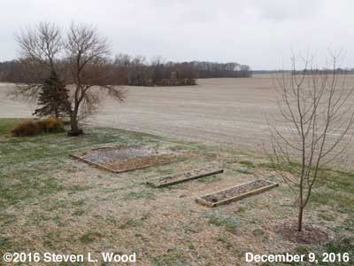 Our Senior Garden - December 9, 2016