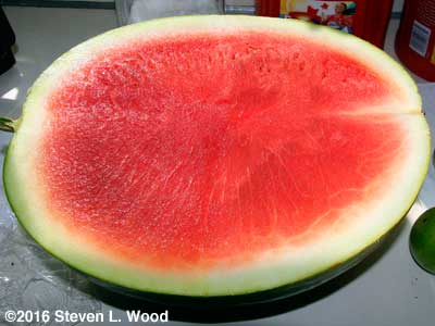 Cut seedless watermelon