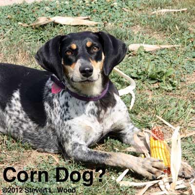 Corn dog?