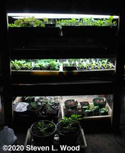 Crowded plant rack - March 14, 2020