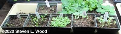 Communal pots needing transplanting