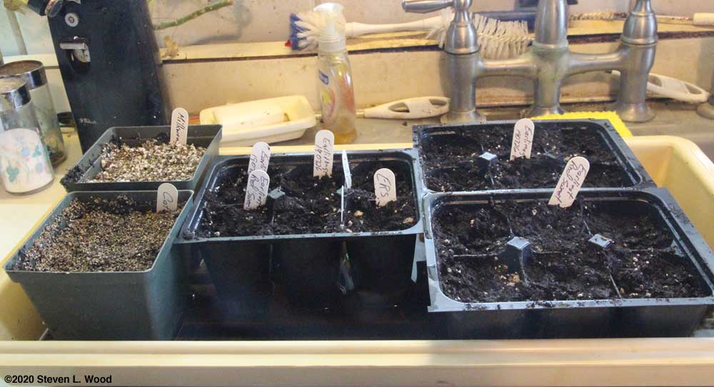 Milkweed, catnip, tomatoes and peppers started