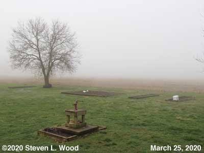 Our Foggy Senior Garden - March 25, 2020