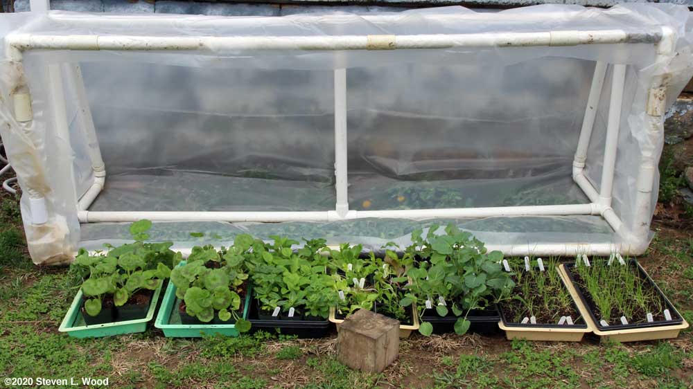 Cold frame - March 28, 2020