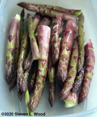 Picked asparagus