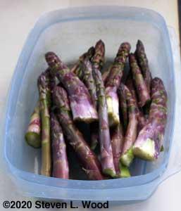 Today's asparagus