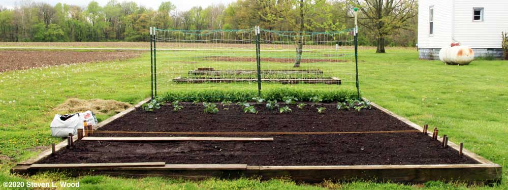 Main bed worked up and carrots seeded