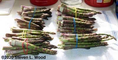 Bundled asparagus
