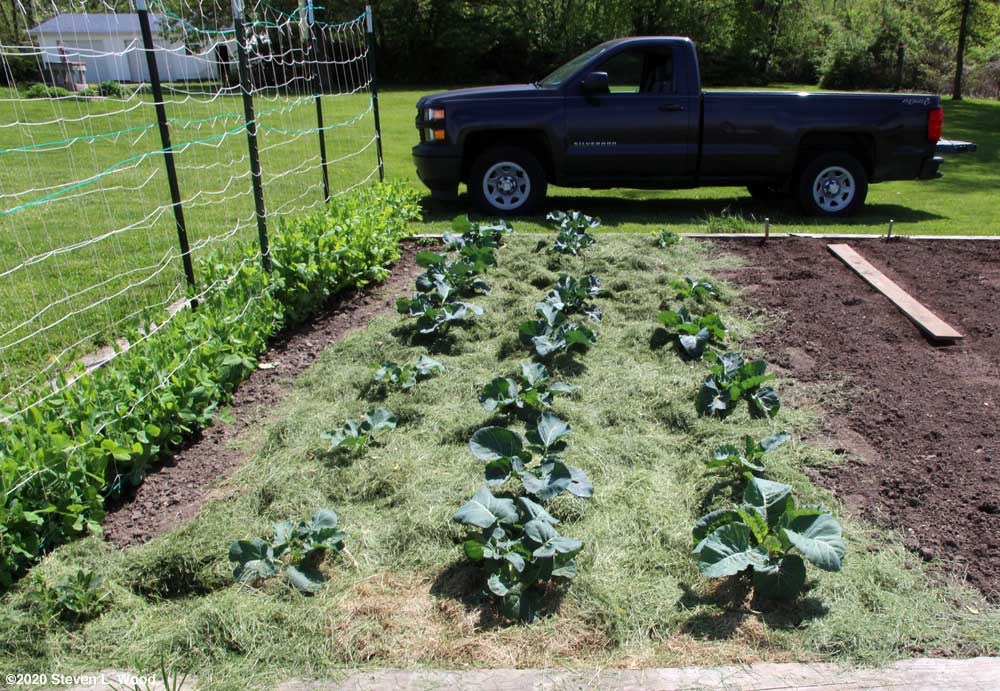 Broccoli and cauliflower mulched