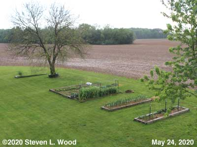 Our Senior Garden - May 24, 2020