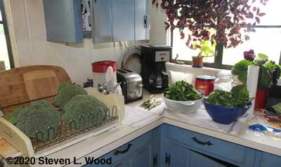 Broccoli, asparagus, and spinach drying in kitchen