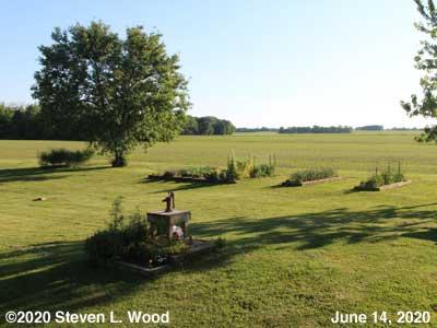 Our Senior Garden - June 14, 2020