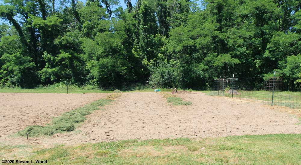 Melons planted and mulched with grass clippings