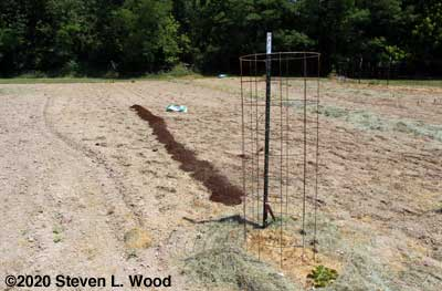 Compost/peat moss mix applied to pea row