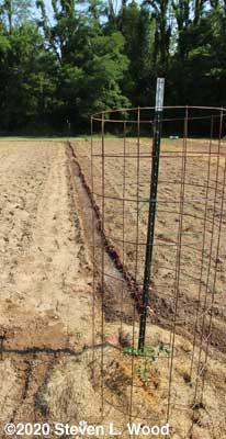 Furrow dug and watered