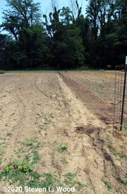 Furrow partly covered and tamped down - weeds visible