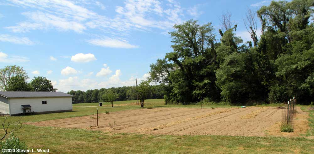 East Garden planted and cultivated - June 22, 2020