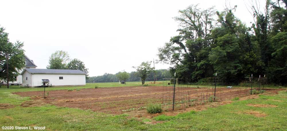 Our East Garden plot on June 28, 2020