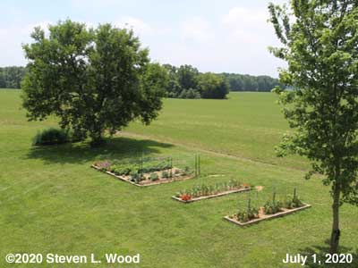 Our Senior Garden - July 1, 2020