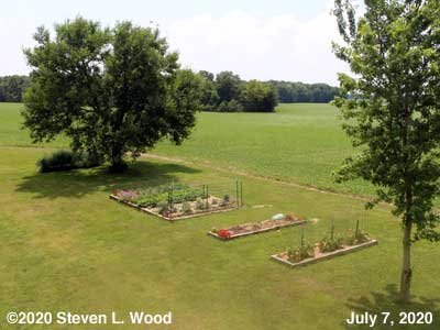 Our Senior Garden - July 7, 2020