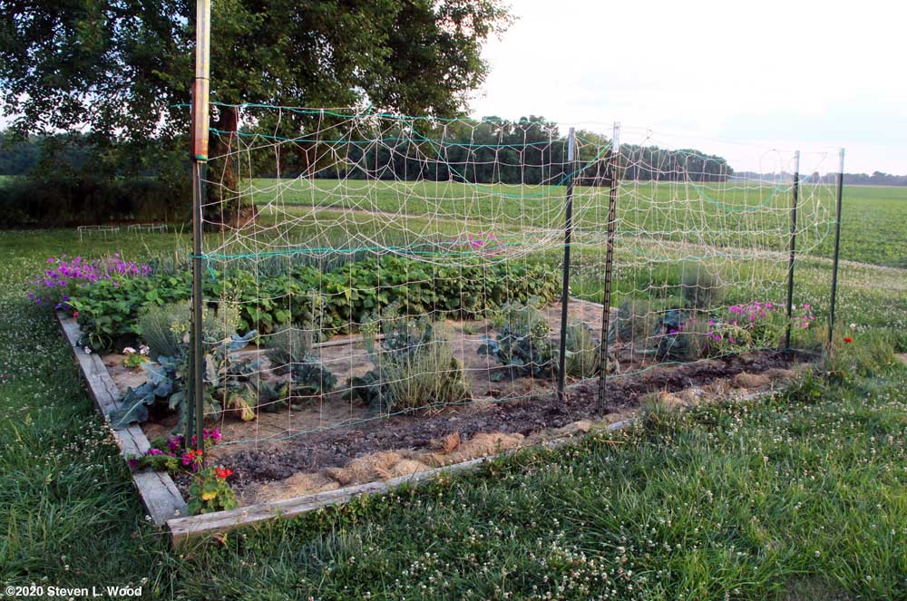 Cucumber bed in main raised bed prepared