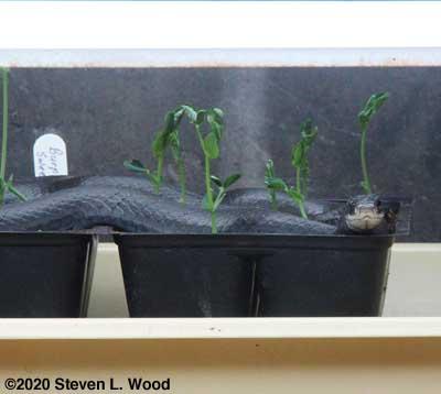 Snake under plant lights