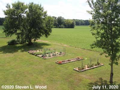 Our Senior Garden - July 11, 2020