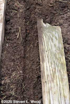 Shallow furrow made by 1x4 board