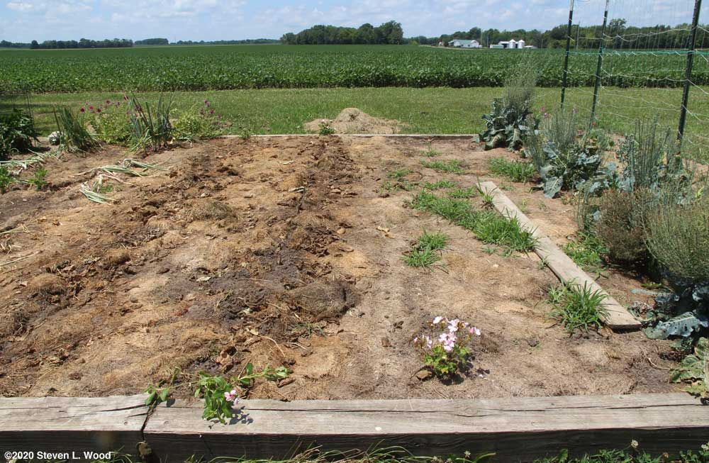 Main raised bed with mulch and weeds