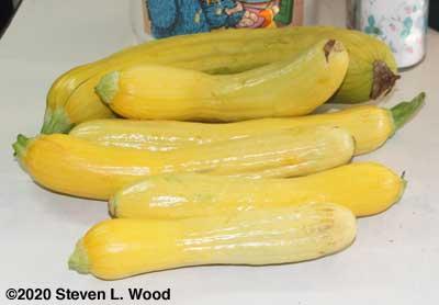 Pretty yellow squash