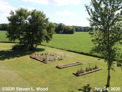 Our Senior Garden - July 24, 2020