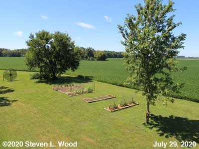 Our Senior Garden - July 29, 2020