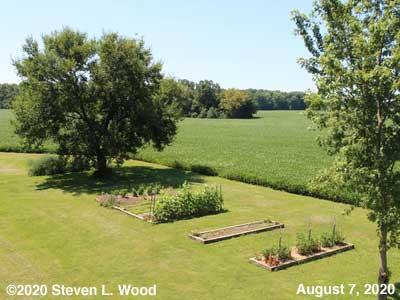 Our Senior Garden - August 7, 2020