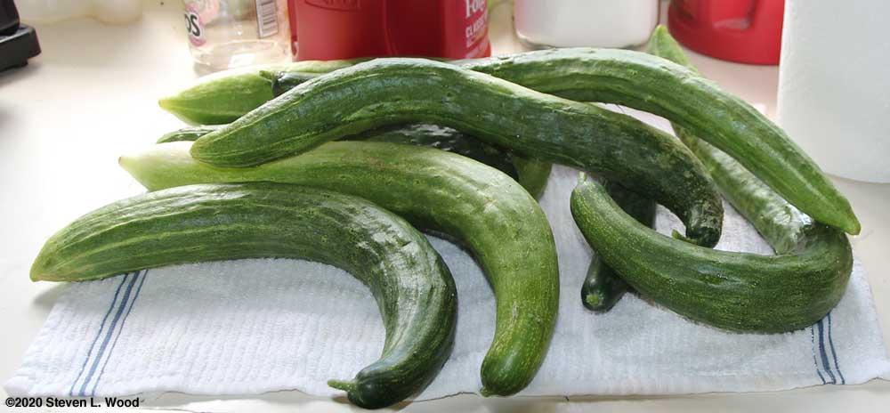Japanese Long Pickling cucumbers