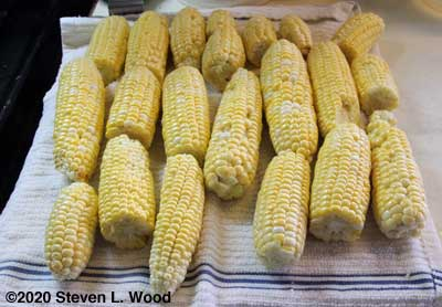 More sweet corn